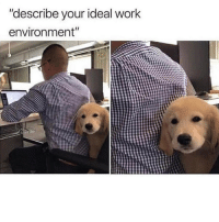 """Memes, Work, and 🤖: """"describe your ideal work  environment"""" Yes, please!"""
