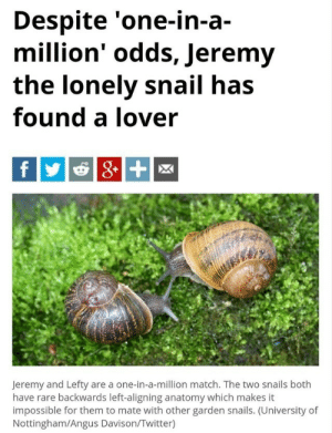 Memes, Tumblr, and Twitter: Despite 'one-in-a-  million' odds, Jeremy  the lonely snail has  found a lover  Jeremy and Lefty are a one-in-a-million match. The two snails both  have rare backwards left-aligning anatomy which makes it  impossible for them to mate with other garden snails. (University of  Nottingham/Angus Davison/Twitter) positive-memes:If Jeremy can do it, so can you!