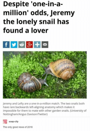 News, Twitter, and Good: Despite 'one-in-a-  million' odds, Jeremy  the lonely snail has  found a lover  Jeremy and Lefty are a one-in-a-million match. The two snails both  have rare backwards left-aligning anatomy which makes it  impossible for them to mate with other garden snails. (University of  Nottingham/Angus Davison/Twitter)  soap-city  The only good news of 2016 Being positive about 2016 despite everything