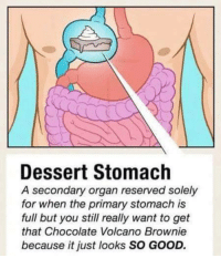 Memes, Chocolate, and Dessert: Dessert Stomach  A secondary organ reserved solely  for when the primary stomach is  full but you still really want to get  that Chocolate Volcano Brownie  because it just looks SO GOOD.