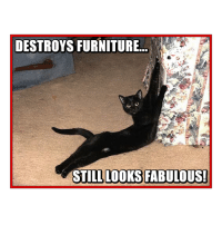 Memes, Furniture, and 🤖: DESTROYS FURNITURE  STILL LOOKS FABULOUS! Strike a pose...
