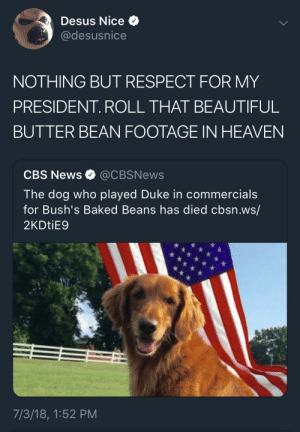 Baked, Beautiful, and Dank: Desus Nice  @desusnice  NOTHING BUT RESPECT FOR MY  PRESIDENT. ROLL THAT BEAUTIFUL  BUTTER BEAN FOOTAGE IN HEAVEN  CBS News @CBSNews  The dog who played Duke in commercials  for Bush's Baked Beans has died cbsn.ws/  2KDtiE9  7/3/18, 1:52 PM RIP Duke tha God by AmericanVirgin FOLLOW HERE 4 MORE MEMES.