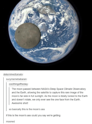 The moon passed between NASAs Deep Space Climate Observatory and Earthomg-humor.tumblr.com: determinedtomato  sucymemebabaran  coolthingoftheday  The moon passed between NASA's Deep Space Climate Observatory  and the Earth, allowing the satellite to capture this rare image of the  moon's far side in full sunlight. As the moon is tidally locked to the Earth  and doesn't rotate, we only ever see the one face from the Earth.  Awesome shot!  so basically this is the moon's ass  if this is the moon's ass could you say we're getting  mooned The moon passed between NASAs Deep Space Climate Observatory and Earthomg-humor.tumblr.com
