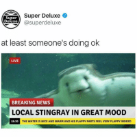 tag someone who needs this happy stingray 🤗 @belindamceyebrow 4 u (@superdeluxe on Twitter): DETSuper Deluxe  Super  Deluxe) @superdeluxe  at least someone's doing ok  LIVE  BREAKING NEWS  LOCAL STINGRAY IN GREAT MOOD  18:30  THE WATER IS NICE AND WARM AND HIS FLAPPY PARTS FEEL VERY FLAPPY INDEED tag someone who needs this happy stingray 🤗 @belindamceyebrow 4 u (@superdeluxe on Twitter)