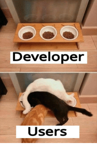Reality, Expectation, and Developer: Developer  Users expectation vs reality