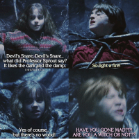 Memes, Devil, and Sprouts: Devil's Snare, Devil's Snare.  what did Professor Sprout say?  So light a It likes the dark and the damp  re  FIREFA WKESS  es of course..  HAVE YOU GONE MAD?!?!  but there's no wood!  ARE YOU A WITCH OR NOT?? Book quote 📚 Ron is me when someone says something stupid 😂 HarryPotter