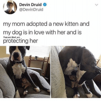 AWH: Devin Druid  @DevinDruid  my mom adopted a new kitten and  my dog is in love with her and is  protecting her  Featured will ent AWH