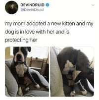 Funny, Love, and Mom: DEVINDRUID  @DevinDruid  my mom adopted a new kitten and my  dog is in love with her and is  protecting her Adorable