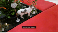 Disney, Funny, and Mickey Mouse: Devourer of Disney This cat may have ate Mickey Mouse