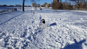 Dexter enjoying his first trip to the dog park.: Dexter enjoying his first trip to the dog park.