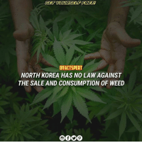 """England, Memes, and North Korea: dFACTSPERT  NORTH KOREA HAS NO LAW AGAINST  THE SALE AND CONSUMPTION OF WEED When It Comes To Marijuana, North Korea Appears To Have Liberal Policy Of Tolerance NorthKorea's apparent stance on marijuana may surprise you. A 29-year-old freelance writer from England wrote an account on his blog explaining how he purchased a grocery bag full of weed at an indoor market in rural North Korea and smoked it with impunity both at outdoor parks and monuments, as well as in restaurants and bars Bag of pot that journalist Darmon Richter bought at a market in Rason, North Korea, for about 80 cents. """"Cannabis grows wildly in North Korea and has even been sold abroad by government agencies as a way to earn foreign currency"""" said Sokeel Park, the director of research and strategy at Liberty In North Korea"""