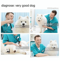 "Memes, Dodge, and Free Samples: diagnose: very good dog  gettyimage  getty images  @Dr Smashlove  gettyimage Not me AF 😅. My doctor is a woman and she don't even engage in pleasantries Bruh. She just like ""well smash to most of my patients I start by asking if they've engaged in risky behavior but I'm just gonna ASSUME THAT YOU'VE BEEN RISKY AF OL DIRTY DOG LOOKIN ASS BOY so let's see if you went another six months dodging bullets like Keanu Reaves in the cot damn Matrix - let the nurse yank some blood out yo arm, then pee in this cup, then lemme jam a q-tip down yo PP while u wince in pain so we can make sure you're still clean. And I'm not even gonna tell you to use condoms and give you a free sample because YOU'RE MY ONLY PATIENT WHO *TRIES* TO GET WOMEN PREGNANT, WITCHOE RATCHET ASS"". U know what tho? She love me. Because unlike u real life dirty ass dogs? AT LEAST I GET TESTED 😅 ThankYouDoctor LoveYouToo DontFront YouLoveThisCleanPP 😘😂😂😂"