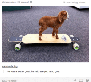 Goat, Source, and You: dialupmodem osamah  Source: babygoatsand. ..  jasminedarling:  He was a skater goat, he said see you later, goat.  322,710 notes