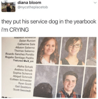 Crying, Lol, and Memes: diana bloom  @nycstheplacetob  they put his service dog in the yearbook  i'm CRYING  IVIaalSon nowietle  Dylan Runion  Catherine Sale  Allyson Salierno  Thomas Salierno  Ricardo Sanchez Portillo  Rogelio Santiago Padilla  Featured @will ent  Alpha Schalk  Andrew Schalk  Sophia Schenck  Abigail Schmidt  Colleen Schneider  Ryan Scott  Gail Seablom  Scott Seestedt 😂😂 The yearbook has just become legendary, lol Cr Diana Bloom