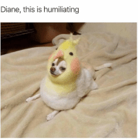 come on diane (@tank.sinatra): Diane, this is humiliating come on diane (@tank.sinatra)