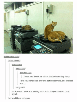 Cats, Cute, and Fuck You: dickheadbenadict:  vaultedthewall  skullspeare:  bead-bead:  awwww-cute:  These cats live in our office, this is where they sleep  Have you considered only one cat sleeps there, and the rest  copycats?  Fuck you all I work at a printing press and I laughed so hard I hurt  myself.  that would be a cat-scan Office cats!omg-humor.tumblr.com