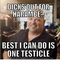 I have a buddy who's an expert on gorillas: DICKS OUT FOR  HARAMBEP  BEST I  CANADOIS  ONE TESTICLE  WNLOAD MEME GENERATOR FROM HTTP://MEMECRUNCH.COM I have a buddy who's an expert on gorillas