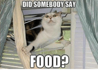 Did Somebody Say: DID SOMEBODY SAY  FOOD