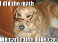 Funny Dog Memes - Dogtime: did the math  We can tafford the cat Funny Dog Memes - Dogtime