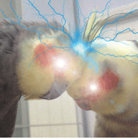 Energy, Future, and How To: did u know,  birb scritches produce electric charge scientists in future will figure out how to harvest this sort of energy electric scritch stations will spread around the world clean, eco-friendly energy will shape the new world