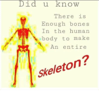 """Bones, Tumblr, and Blog: Did u know  There is  Enough bones  In the human  body to make  An entire  Skeleton? <p><a href=""""http://memehumor.net/post/171106860735/these-new-discoveries-always-shock-me-what-will"""" class=""""tumblr_blog"""">memehumor</a>:</p>  <blockquote><p>These new discoveries always shock me. What will they find next?</p></blockquote>"""