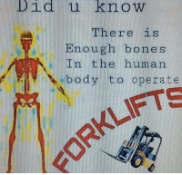 """Bones, Reddit, and Human: Did u know  There is  Enough bones  In the human  body to operate  RKLIFTS <p>[<a href=""""https://www.reddit.com/r/surrealmemes/comments/7fn7h1/t_h_e_m_o_r_e_y_o_u_k_n_o_w/"""">Src</a>]</p>"""
