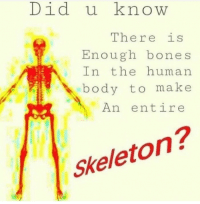 """Bones, Http, and Human: Did u know  There is  Enough bones  In the human  body to make  An entire  Skeleton? <p>Worth it? via /r/MemeEconomy <a href=""""http://ift.tt/2ydChoR"""">http://ift.tt/2ydChoR</a></p>"""