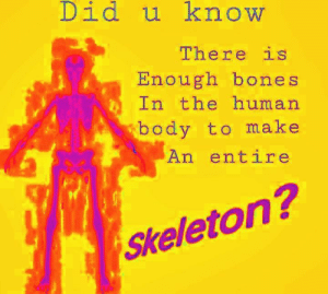 Bones, Human, and One: Did u know  There is  Enough bones  In the human  body to make  An entire  Skeleton? ONE 🅱️ONE 🅱️OI