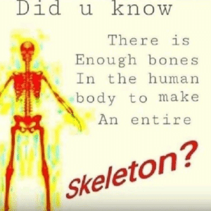 human body: Did u know  There is  Enough bones  In the human  body to make  An entire  Skeleton?