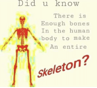 Bones, Fuck, and Human: Did u know  There is  Enough bones  n the human  body to make  An entire  Skeleton? FUCK IM SCARED