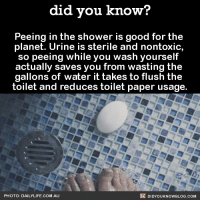 """<p><a href=""""http://copesetic.tumblr.com/post/145406861773/did-you-kno-peeing-in-the-shower-is-good-for"""" class=""""tumblr_blog"""">copesetic</a>:</p>  <blockquote><p><a class=""""tumblr_blog"""" href=""""http://did-you-kno.tumblr.com/post/145375411893"""">did-you-kno</a>:</p> <blockquote> <p>Peeing in the shower is good for the  planet. Urine is sterile and nontoxic,  so peeing while you wash yourself  actually saves you from wasting the  gallons of water it takes to flush the  toilet and reduces toilet paper usage.  <a href=""""http://www.mentalfloss.com/article/80810/you-should-totally-pee-shower"""">Source</a></p> </blockquote>  <p>Urine has recently been found not sterile. Stop pissing in the shower.</p></blockquote>  <p>Water that washes the dirt off your body isn&rsquo;t sterile either. What exactly is the difference?</p>: did vou know?  eeing in the shower  planet. Urine is sterile and nontoxic,  so peeing while you wash yourself  actually saves you from wasting the  gallons of water it takes to flush the  toilet and reduces toilet paper usage.  P  is good for the  PHOTO: DAILYLIFE.COM.AU  DIDYOUKNOWBLOG.COM <p><a href=""""http://copesetic.tumblr.com/post/145406861773/did-you-kno-peeing-in-the-shower-is-good-for"""" class=""""tumblr_blog"""">copesetic</a>:</p>  <blockquote><p><a class=""""tumblr_blog"""" href=""""http://did-you-kno.tumblr.com/post/145375411893"""">did-you-kno</a>:</p> <blockquote> <p>Peeing in the shower is good for the  planet. Urine is sterile and nontoxic,  so peeing while you wash yourself  actually saves you from wasting the  gallons of water it takes to flush the  toilet and reduces toilet paper usage.  <a href=""""http://www.mentalfloss.com/article/80810/you-should-totally-pee-shower"""">Source</a></p> </blockquote>  <p>Urine has recently been found not sterile. Stop pissing in the shower.</p></blockquote>  <p>Water that washes the dirt off your body isn&rsquo;t sterile either. What exactly is the difference?</p>"""