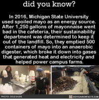 Amazon, Apple, and Bad: did vou know?  In 2016, Michigan State University  used spoiled mayo as an energy source.  After 1,250 gallons of mayonnaise went  bad in the cafeteria, their sustainability  department was determined to keep it  out of the landfill. So, they emptied 500  containers of mayo into an anaerobic  digester, which broke it down into gases  that generated heat and electricity and  helped power campus farms.  DIDYOUKNOWFACTS.coM  PHOTO: COLE GUDE Mayo gas! ⚡️ electricity gas mayonnaise sustainability 📢 Share the knowledge! Tag your friends in the comments. ➖➖➖➖➖➖➖➖➖➖➖ Want more Did You Know(s)? ➡📓 Buy our book on Amazon: [LINK IN BIO] ➡📱 Download our App: http:-apple.co-2i9iX0u ➡📩 Get daily text message alerts: http:-Fact-Snacks.com ➡📩 Free email newsletter: http:-DidYouKnowFacts.com-Sign-Up- ➖➖➖➖➖➖➖➖➖➖➖ We post different content across our channels. Follow us so you don't miss out! 📍http:-facebook.com-didyouknowblog 📍http:-twitter.com-didyouknowfacts ➖➖➖➖➖➖➖➖➖➖➖ DYN FACTS TRIVIA TIL DIDYOUKNOW NOWIKNOW