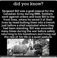 Amazon, Apple, and Facebook: did vou know?  Sergeant Bill was a goat mascot for the  Canadian Army during WWI. Soldiers  went against orders and took Bill to the  front lines, where he saved 3 of their  lives by head-butting them into a trench  just before a shell exploded where they  had been standing. Bill was wounded  many times during the war before safely  returning to his hometown and living out  the rest of his life in a quiet pasture  PHOTO: PUBLIC DOMAIN  DIDYOUKNOWFACTS.COM Not all heroes wear capes. 🐐 goat funny war history 📢 Share the knowledge! Tag your friends in the comments. ➖➖➖➖➖➖➖➖➖➖➖ Want more Did You Know(s)? ➡📓 Buy our book on Amazon: [LINK IN BIO] ➡📱 Download our App: http:-apple.co-2i9iX0u ➡📩 Get daily text message alerts: http:-Fact-Snacks.com ➡📩 Free email newsletter: http:-DidYouKnowFacts.com-Sign-Up- ➖➖➖➖➖➖➖➖➖➖➖ We post different content across our channels. Follow us so you don't miss out! 📍http:-facebook.com-didyouknowblog 📍http:-twitter.com-didyouknowfacts ➖➖➖➖➖➖➖➖➖➖➖ DYN FACTS TRIVIA TIL DIDYOUKNOW NOWIKNOW