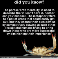 Amazon, Memes, and Book: did vou know?  The ph  rase 'crab mentality' is used to  describe the 'if I can't have it, neither  can you' mindset. The metaphor refers  to a pot of crabs that could easily get  out, but they ensure their own demise  by competitively clawing at each other-  like spiteful humans trying to bring  down those who are more successful  by diminishing their importance  PHOTO: HAMPTONROADS  DIDYOUKNOWBLOG.COM 🦀🦀🦀 crabmentality interesting humanbehavior workplace ➡️📓 Buy our book on Amazon: [LINK IN BIO]