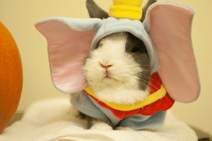 Rabbit, Did, and You: Did you ever see a rabbit cosplayer