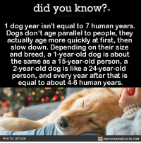 If only they grew the same age as us 🐶💕 dogs cute love 📢 Share the knowledge! Tag your friends in the comments. ➖➖➖➖➖➖➖➖➖➖➖ Want more Did You Know(s)? ➡📓 Buy our book on Amazon: [LINK IN BIO] ➡📱 Download our App: http:-apple.co-2i9iX0u ➡📩 Get daily text message alerts: http:-Fact-Snacks.com ➡📩 Free email newsletter: http:-DidYouKnowFacts.com-Sign-Up- ➖➖➖➖➖➖➖➖➖➖➖ We post different content across our channels. Follow us so you don't miss out! 📍http:-facebook.com-didyouknowblog 📍http:-twitter.com-didyouknowfacts ➖➖➖➖➖➖➖➖➖➖➖ DYN FACTS TRIVIA TIL DIDYOUKNOW NOWIKNOW: did you know?  1 dog year isn't equal to 7 human years.  Dogs don't age parallel to people, they  actually age more quickly at first, then  slow down. Depending on their size  and breed, a 1-year-old dog is about  the same as a 15-year-old person, a  2-year-old dog is like a 24-year-old  person, and every year after that i:s  equal to about 4-6 human years  PHOTO: ISTOCK  DIDYOUKNOWFACTS.COM If only they grew the same age as us 🐶💕 dogs cute love 📢 Share the knowledge! Tag your friends in the comments. ➖➖➖➖➖➖➖➖➖➖➖ Want more Did You Know(s)? ➡📓 Buy our book on Amazon: [LINK IN BIO] ➡📱 Download our App: http:-apple.co-2i9iX0u ➡📩 Get daily text message alerts: http:-Fact-Snacks.com ➡📩 Free email newsletter: http:-DidYouKnowFacts.com-Sign-Up- ➖➖➖➖➖➖➖➖➖➖➖ We post different content across our channels. Follow us so you don't miss out! 📍http:-facebook.com-didyouknowblog 📍http:-twitter.com-didyouknowfacts ➖➖➖➖➖➖➖➖➖➖➖ DYN FACTS TRIVIA TIL DIDYOUKNOW NOWIKNOW