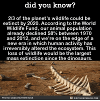Dank, Dinosaur, and Dinosaurs: did you know?  2/3 of the planet's wildlife could be  extinct by 2020. According to the World  Wildlife Fund, our animal population  already declined 58% between 1970  and 2012, and we're on the edge of a  new era in which human activity has  irreversibly altered the ecosystem. This  loss of wildlife would be the largest  mass extinction since the dinosaurs  DIDYOUKNOWBLOG.coM  PHOTO: ODM, SHUTTERSTOCK Let's be a better world! 🐼🐯  Did You Know that you can subscribe and get our facts texted to your phone? ➡ https://fact-snacks.com