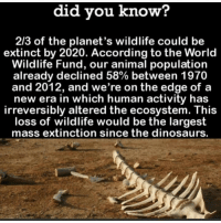 Dinosaur, Memes, and Dinosaurs: did you know?  2/3 of the planet's wildlife could be  extinct by 2020. According to the World  Wildlife Fund, our animal population  already declined 58% between 1970  and 2012, and we're on the edge of a  new era in which human activity has  irreversibly altered the ecosystem. This  loss of wildlife would be the largest  mass extinction since the dinosaurs