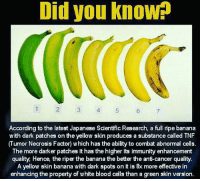 Did you know?: Did you know  2  4  5  6  7  According to the latest Japanese Scientific Research, a full ripe banana  w ith dark patches on the yellow skin produces a substance called TNF  (Tumor Necrosis Factor) w hich has the ability to combat abnormal cells.  The more darker patches it has the higher its immunity enhancement  quality, Hence, the riper the banana the better the ant-cancer quality  A yellow skin banana with dark spots on it is 8x more effective in  enhanang the property of white blood cells than a green skin version Did you know?