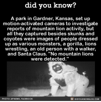 "Some really bored people in Gardner, KS...but no mountain lions. 🤔  📓Buy the official Did You Know book on Amazon: http://amzn.to/2eNRlj1: did you know?  A park in Gardner, Kansas, set up  motion-activated cameras to investigate  reports of mountain lion activity, but  all they captured besides skunks and  coyotes were images of people dressed  up as various monsters, a gorilla, lions  wrestling, an old person with a walker,  and Santa Claus. ""No mountain lions  were detected.""  DIDYOUKNOWBLOG.coM  PHOTO: AP NEWS, FACEBOOK Some really bored people in Gardner, KS...but no mountain lions. 🤔  📓Buy the official Did You Know book on Amazon: http://amzn.to/2eNRlj1"
