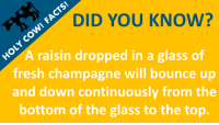 Fresh: DID YOU KNOW?  A raisin dropped in a glass of  fresh champagne will bounce up  and down continuously from the  bottom of the glass to the top.