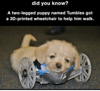 Help, Puppy, and Wholesome: did you know?  A two-legged puppy named Tumbles got  a 3D-printed wheelchair to help him walk. <p>Wholesome 3D Printer</p>