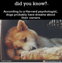 All I've ever needed to hear in life. ❤️🐶 dogs dreams love dogsofinstagram 📢 Share the knowledge! Tag your friends in the comments. ➖➖➖➖➖➖➖➖➖➖➖ Want more Did You Know(s)? ➡📓 Buy our book on Amazon: [LINK IN BIO] ➡📱 Download our App: http:-apple.co-2i9iX0u ➡📩 Get daily text message alerts: http:-Fact-Snacks.com ➡📩 Free email newsletter: http:-DidYouKnowFacts.com-Sign-Up- ➖➖➖➖➖➖➖➖➖➖➖ We post different content across our channels. Follow us so you don't miss out! 📍http:-facebook.com-didyouknowblog 📍http:-twitter.com-didyouknowfacts ➖➖➖➖➖➖➖➖➖➖➖ DYN FACTS TRIVIA TIL DIDYOUKNOW NOWIKNOW: did you know?  According to a Harvard psychologist,  dogs probably have dreams  about  their owners.  PHOTO: ISTOCK  DIDYOUKNOWFACTS.COM All I've ever needed to hear in life. ❤️🐶 dogs dreams love dogsofinstagram 📢 Share the knowledge! Tag your friends in the comments. ➖➖➖➖➖➖➖➖➖➖➖ Want more Did You Know(s)? ➡📓 Buy our book on Amazon: [LINK IN BIO] ➡📱 Download our App: http:-apple.co-2i9iX0u ➡📩 Get daily text message alerts: http:-Fact-Snacks.com ➡📩 Free email newsletter: http:-DidYouKnowFacts.com-Sign-Up- ➖➖➖➖➖➖➖➖➖➖➖ We post different content across our channels. Follow us so you don't miss out! 📍http:-facebook.com-didyouknowblog 📍http:-twitter.com-didyouknowfacts ➖➖➖➖➖➖➖➖➖➖➖ DYN FACTS TRIVIA TIL DIDYOUKNOW NOWIKNOW