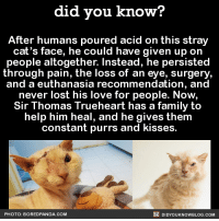 Bored, Dank, and Panda: did you know?  After humans poured acid on this stray  cat's face, he could have given up on  people altogether. Instead, he persisted  through pain, the loss of an eye, surgery,  and a euthanasia recommendation, and  never lost his love for people. Now,  Sir Thomas Trueheart has a family to  help him heal, and he gives them  constant purrs and kisses.  DIDYoukNowBLOG.coM  PHOTO: BORED PANDA. COM SO HAPPY! 🐱  Get exclusive Did You Know(s) in your inbox ➡ http://goo.gl/iRFFE7