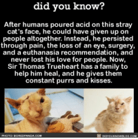 Bored, Memes, and Social Media: did you know?  After humans poured acid on this stray  cat's face, he could have given up on  people altogether. Instead, he persisted  through pain, the loss of an eye, surgery,  and a euthanasia recommendation, and  never lost his love for people. Now,  Sir Thomas Trueheart has a family to  help him heal, and he gives them  constant purrs and kisses.  RE DIDYoukNowBLOG.coM  PHOTO: BORED PANDA.COM Every animal deserves a chance! 😸 cute cats animals love adoptdontshop ➖➖➖➖➖➖➖➖➖➖➖ 📢 Share the helpful knowledge! Tag your friends in the comments. ➖➖➖➖➖➖➖➖➖➖➖ We post different content on all our different social media channels. Follow all our accounts so you don't miss out! 📍http:-facebook.com-didyouknowblog 📍http:-didyouknowblog.com 📍http:-twitter.com-didyouknowfacts 📍http:-fact-snacks.com ➖➖➖➖➖➖➖➖➖➖➖ DYN FACTS TRIVIA TIL DIDYOUKNOW NOWIKNOW