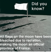 """Memes, France, and Moon: Did you  know?  All flags on the moon have been  bleached due to radiation,  making the moon an official  province of France <p>Lunatic via /r/memes <a href=""""https://ift.tt/2lWPOKg"""">https://ift.tt/2lWPOKg</a></p>"""