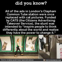 """Dank, Common, and Http: did you know?  All of the ads in London's Clapham  Common Tube station were once  replaced with cat pictures. Funded  by CATS (the Citizens Advertising  Takeover Service), the stunt was  intended to people to think  differently about the world and realize  they have the power to change it.""""  DIDYOUKNOWBLOG.coM  PHOTO: CITIZENS ADVERTISING TAKEOVER SERVICE Give me all the cat ads. 🐱  Get exclusive Did You Know(s) in your inbox ➡ http://goo.gl/iRFFE7"""