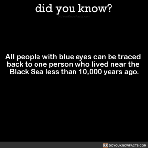 x-cetra:  gay-jesus-probably:  zohbugg:  i-want-cheese:  saturdaynightlycanthrope:  celticpyro:  did-you-kno: All people with blue eyes can be traced  back to one person who lived near the  Black Sea less than 10,000 years ago.  Source Source 2 Now when I see a person with blue eyes, I'll know they're a descendant of Ocean-Eyed Slut Man.   You leave great grandpa ocean-eyed slut man alone, he was just living his life  Actually, since this was determined using mitochondrial DNA, the ocean-eyed slut would be a woman, not a man. Mitochondrial DNA is passed down by mothers.   Gram-gram knew how to party  dear ocean eyed party gram-gram thank u for spreading your weird eye mutation and giving every fanfic writer a reason to know an unholy amount of synonyms for the word 'blue'.   All Hail Grandmother Cerulean Orbs : did you know?  All people with blue eyes can be traced  back to one person who lived near the  Black Sea less than 10,000 years ago  回DIDYOUKNOWFACTS.COM x-cetra:  gay-jesus-probably:  zohbugg:  i-want-cheese:  saturdaynightlycanthrope:  celticpyro:  did-you-kno: All people with blue eyes can be traced  back to one person who lived near the  Black Sea less than 10,000 years ago.  Source Source 2 Now when I see a person with blue eyes, I'll know they're a descendant of Ocean-Eyed Slut Man.   You leave great grandpa ocean-eyed slut man alone, he was just living his life  Actually, since this was determined using mitochondrial DNA, the ocean-eyed slut would be a woman, not a man. Mitochondrial DNA is passed down by mothers.   Gram-gram knew how to party  dear ocean eyed party gram-gram thank u for spreading your weird eye mutation and giving every fanfic writer a reason to know an unholy amount of synonyms for the word 'blue'.   All Hail Grandmother Cerulean Orbs