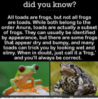 Amazon, Animals, and Facebook: did you know?  All toads are frogs, but not all frogs  are toads. While both belong to the  order Anura, toads are actually a subset  of frogs. They can usually be identified  by appearance, but there are some frogs  that appear dry and bumpy, and many  toads can trick you by looking wet and  slimy. When in doubt, just call it a frog,'  and you'll always be correct. I always doubt my frog identifying skills 🤔🐸 frog toad animals identity 📢 Share the knowledge! Tag your friends in the comments. ➖➖➖➖➖➖➖➖➖➖➖ Want more Did You Know(s)? ➡📱 Download our free App: [LINK IN BIO] ➡📩 Get daily text message alerts: http:-Fact-Snacks.com ➡📓 Buy our book on Amazon: http:-bit.ly-DidYouKnowBook ➡📩 Free email newsletter: http:-DidYouKnowFacts.com-Sign-Up- ➖➖➖➖➖➖➖➖➖➖➖ We post different content across our channels. Follow us so you don't miss out! 📍http:-facebook.com-didyouknowblog 📍http:-twitter.com-didyouknowfacts ➖➖➖➖➖➖➖➖➖➖➖ DYN FACTS TRIVIA TIL DIDYOUKNOW NOWIKNOW