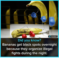 Memes, Black, and 🤖: Did you know?  Bananas get black spots overnight  because they organize illegal  fights during the night. Join our group 8Shit Memes